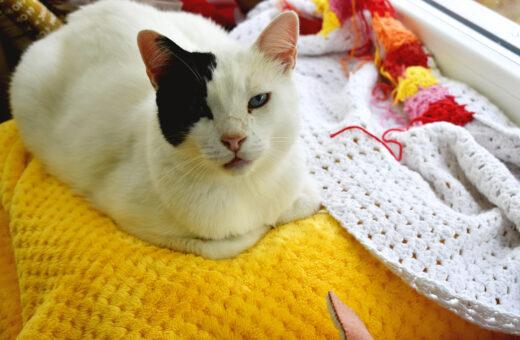 Jack the cat :)